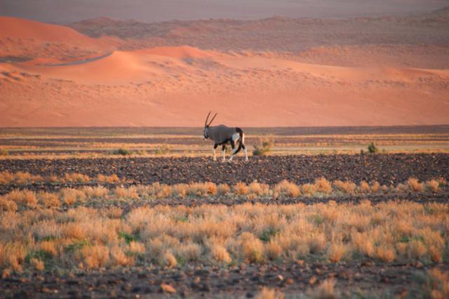 Live More, Travel More in Namibia with Chameleon Safaris - photo by Elaine Villatoro - Sossusvlei - Sand Dunes -  - Deserto da Namibia - Dunas - Antelope - Antílope