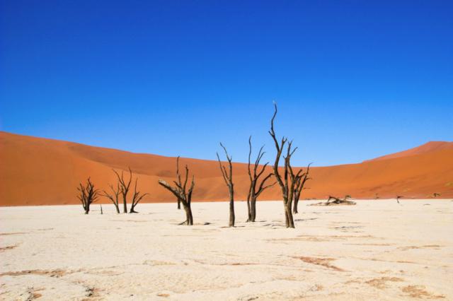 Live More, Travel More in Namibia with Chameleon Safaris - photo by Elaine Villatoro - Sossusvlei - Sand Dunes - Deserto da Namibia - Deadvlei - Dead Vlei - Dead Trees - Árvores Mortas