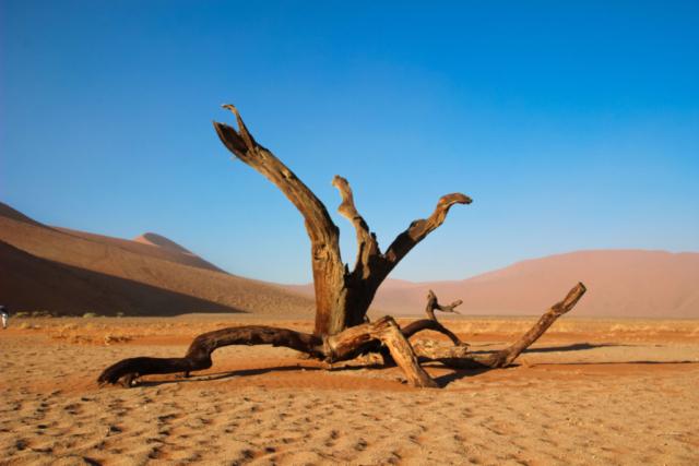 Live More, Travel More in Namibia with Chameleon Safaris - photo by Elaine Villatoro - Sossusvlei - Sand Dunes - Deserto da Namibia - Lodge - Tree