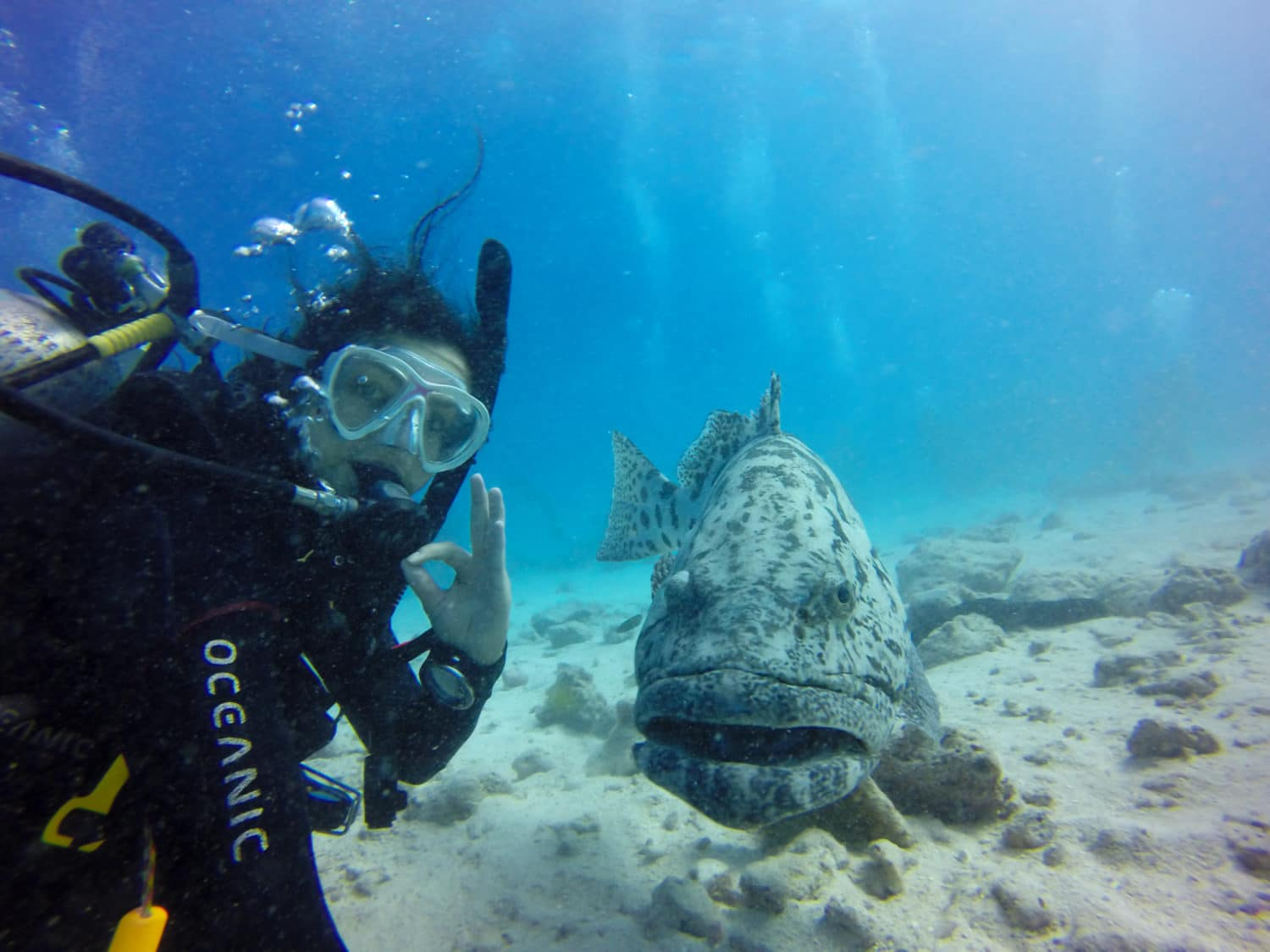 GREAT BARRIER REEF SELFIE GROUPER