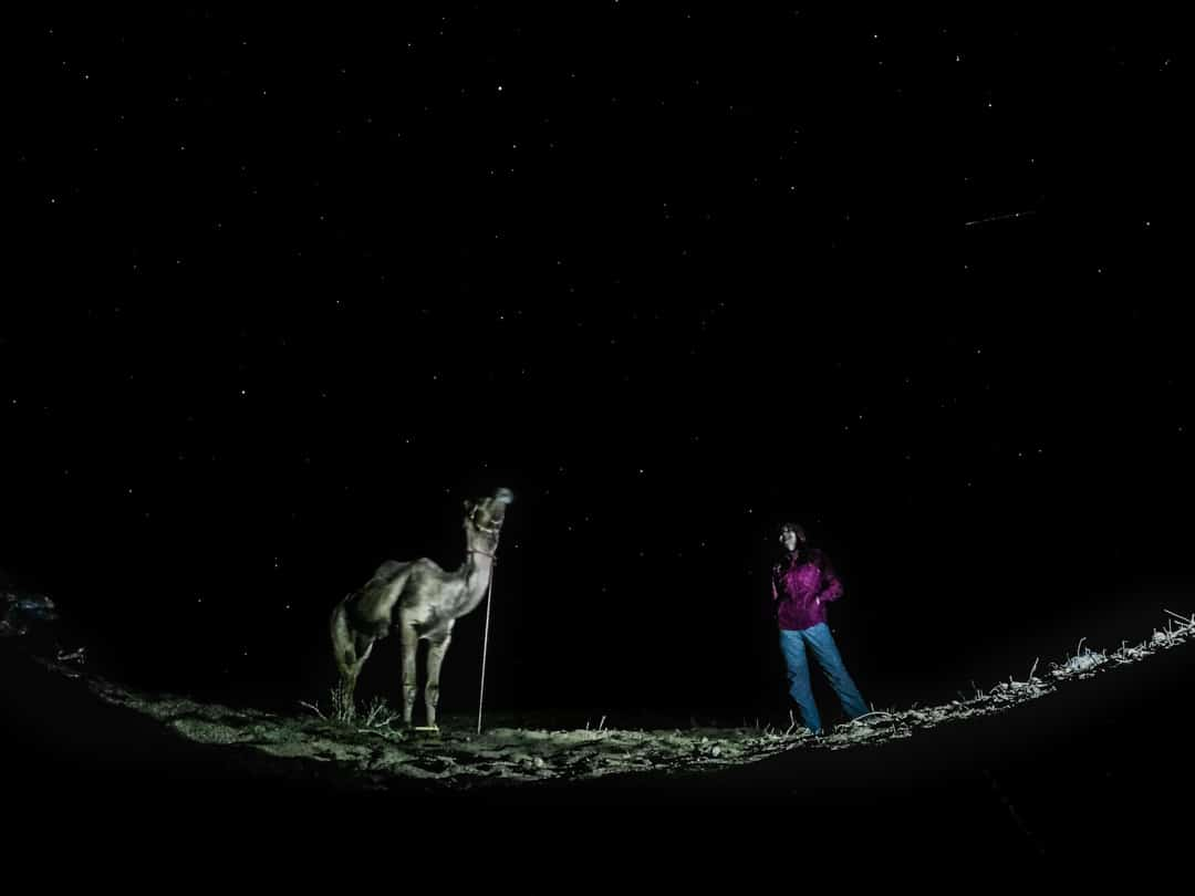 Stars a girl and a camel - Night photo taken with a GoPro in Jaisalmer India