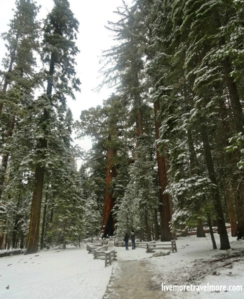 Great hiking trails in California: Giant Sequoias – Yosemite National Park