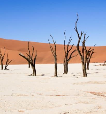 Deserto da Namíbia - Deadvlei