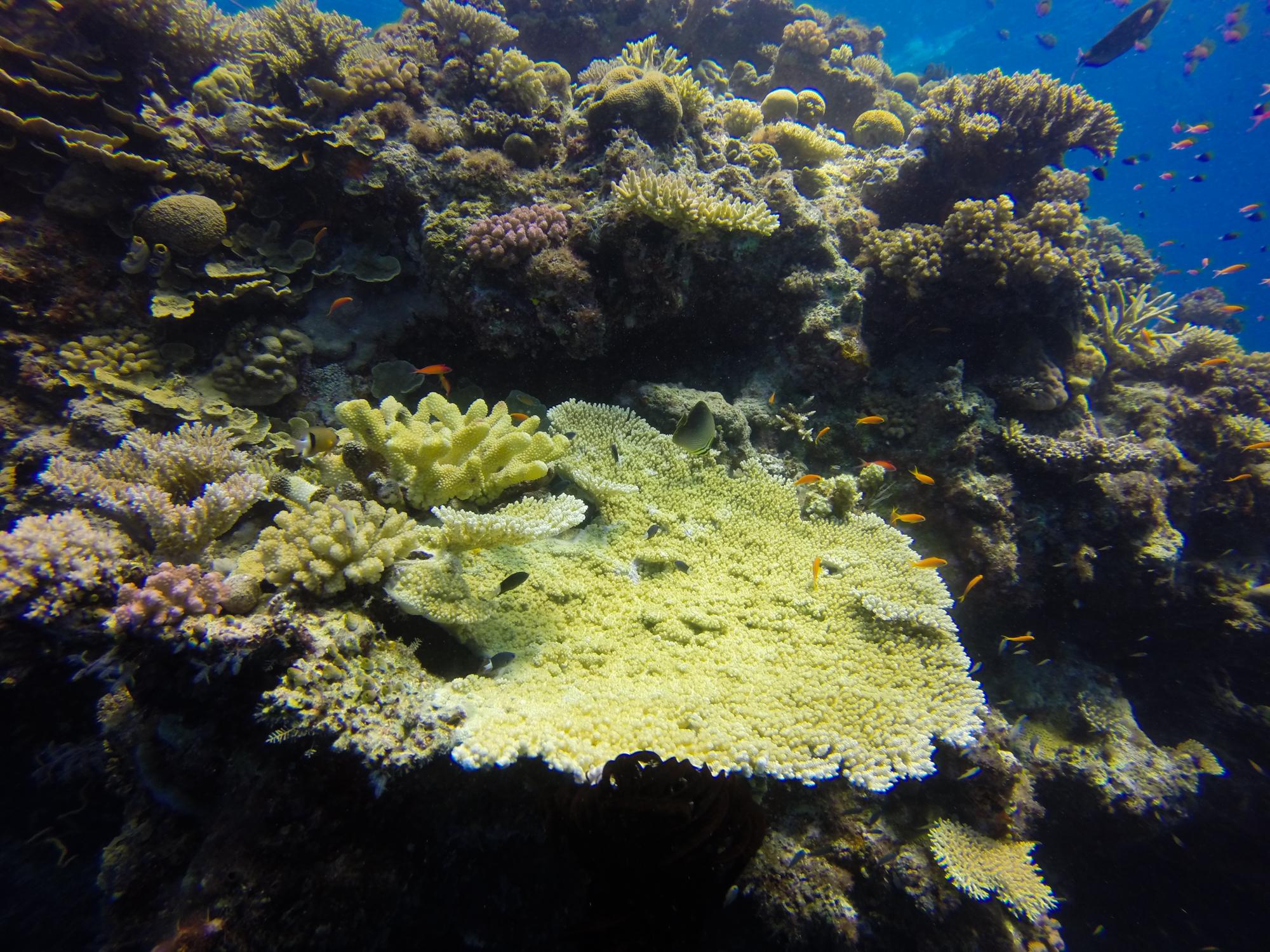 Great Barrier Reef Liveaboard - Steve's bommie