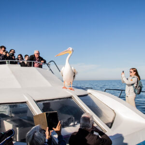 discount cruise trip in Walvis Bay Namibia Ocean Adventures
