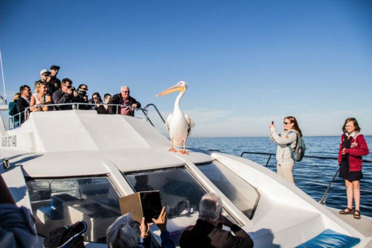 discount cruise trip in Walvis Bay Namibia Ocean Adventures