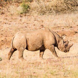 Desconto Tracking de Rinoceronte Negro ou Elefantes na Namíbia com Etangola Tours