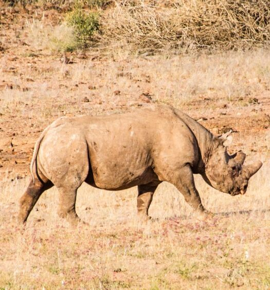 Get discount to do black rhino or elephant tracking in Namibia