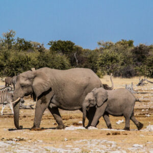 Discount for Etosha Safari with Chameleon Safaris in Namibia