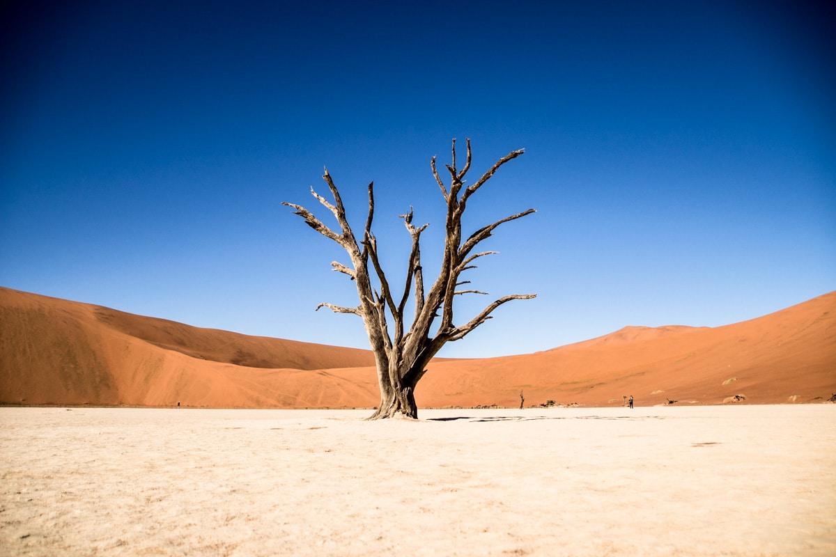Desconto para tour no deserto da Namibia com Chameleon Safaris