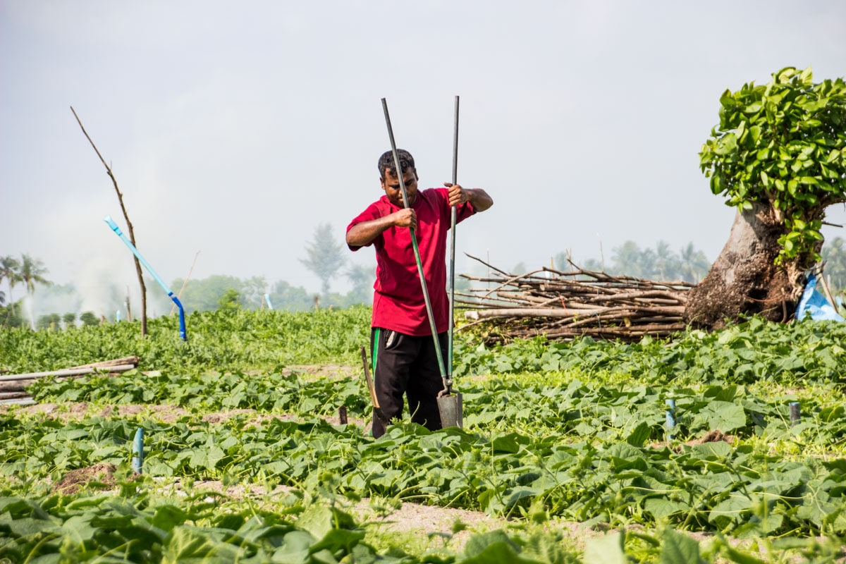 Watermelon Farmer in Thoddoo in Maldives