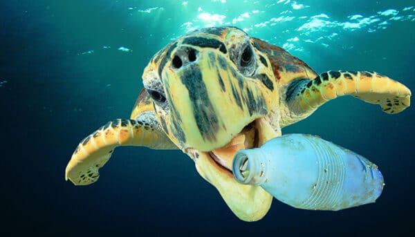 Tartaruga marinha comendo sacola plástica